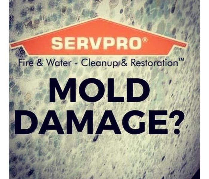 Mold spore and the words Mold Damage across the mold spore